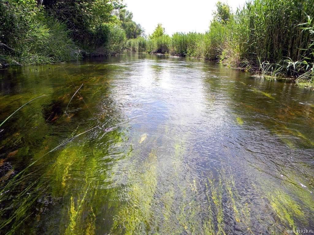 рыбалка на реке тишанка