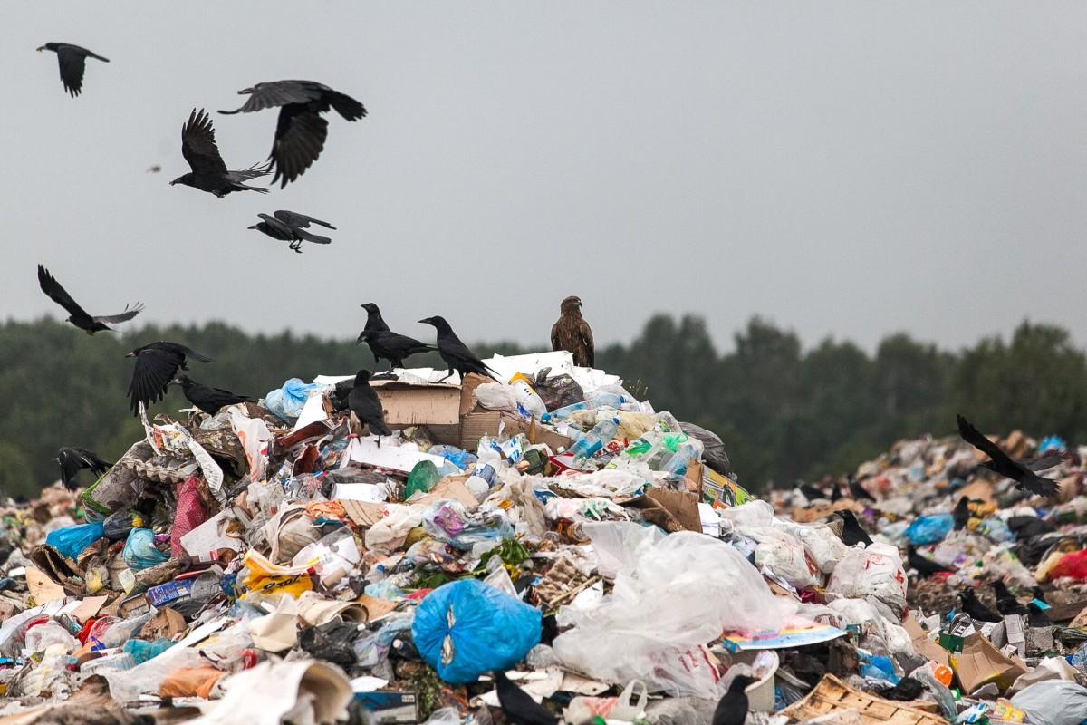 Отвлекающий маневр МПБО-2 не удался: предприятие ликвидировало лишь небольшую кучу мусора 2